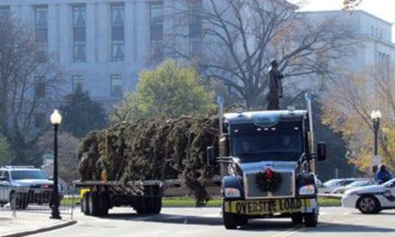 Transporta Kenworth árbol navideño al Capitolio