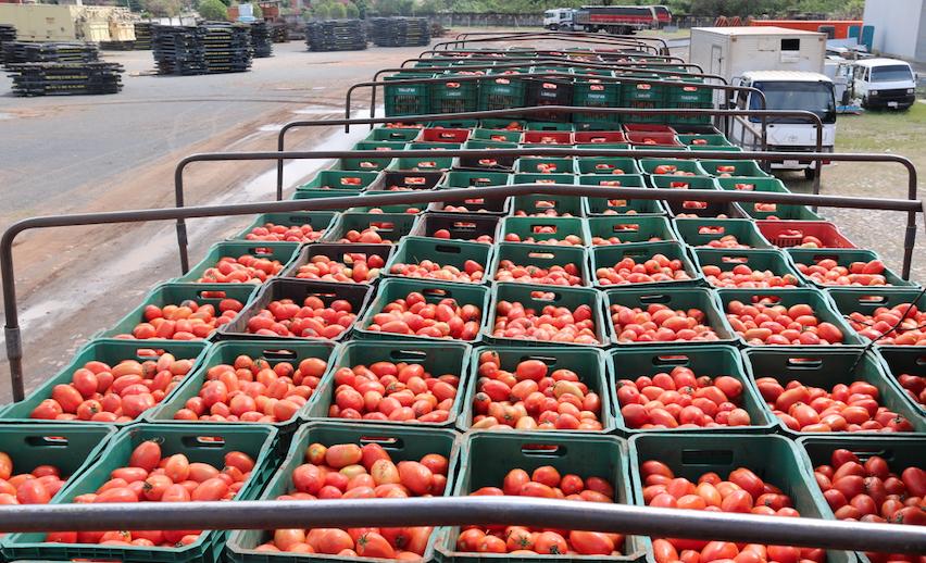 EU busca inspeccionar camiones que exportan tomate mexicano
